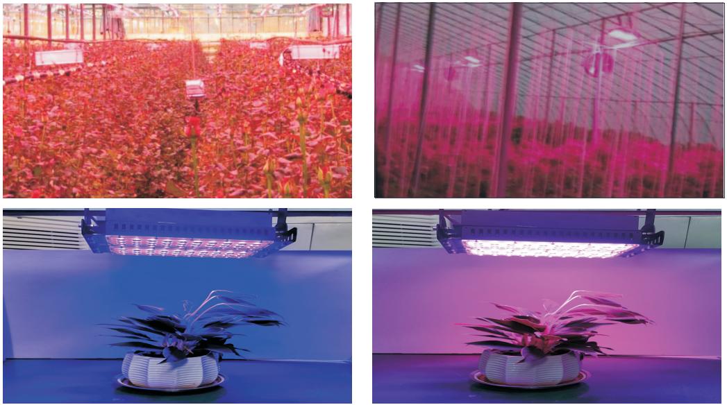 led grow light-5.png